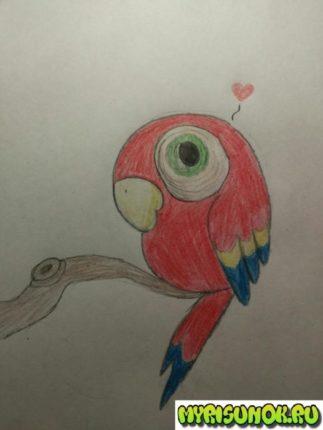 Как нарисовать попугая поэтапно