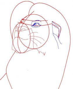 Как нарисовать Симбу 104