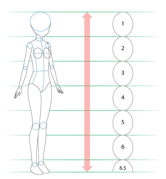 пропорции аниме тела