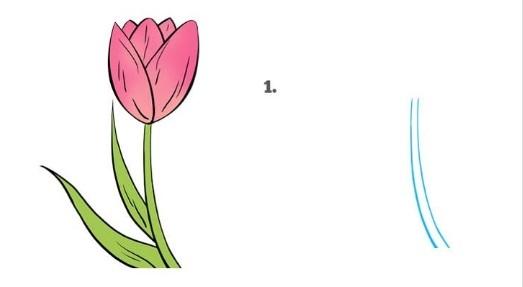как нарисовать тюльпан 1